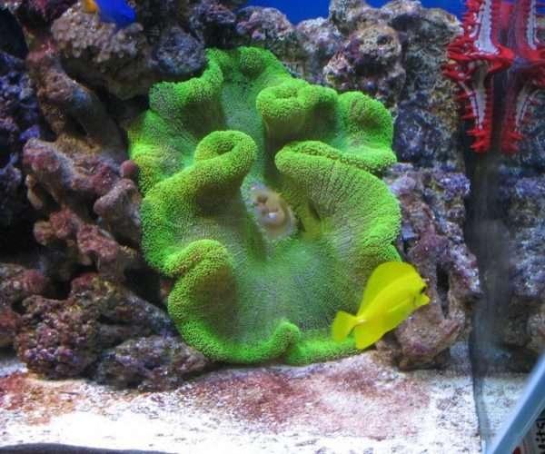 Морской аквариум 400л. в кабинете.