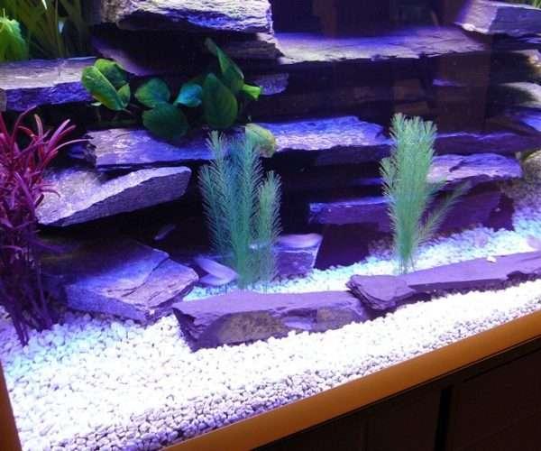 Речной аквариум с радужницами 300л.