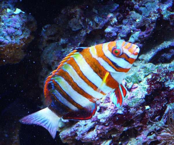 Морской аквариум  1200л. в кабинете.