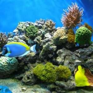 Морской аквариум с жесткими кораллами.