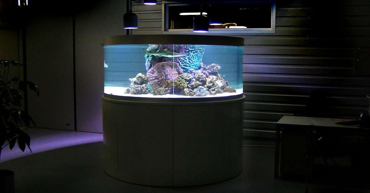 Аквариум с черноперыми рифовыми акулами.
