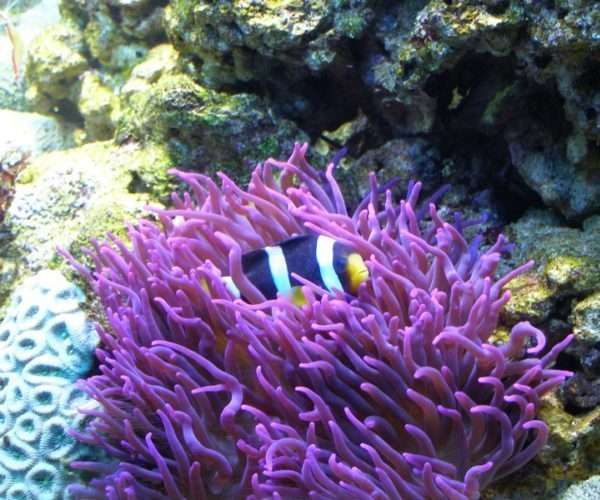 Морской аквариум 500л. в кабинете.
