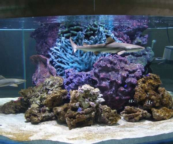 Морской аквариум с акулами 2000л.