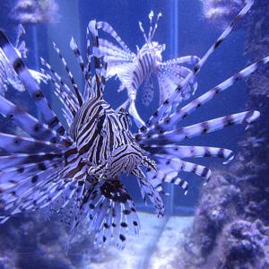 Морской аквариум с хищниками