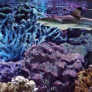Морской аквариум с акулами.